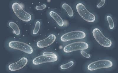 El test Bio Lp-1, un posible cambio de paradigma en las pruebas para la detección de Legionella
